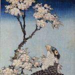 (北)桜花に鷹